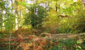 Randonnée Marche SAINT-JEAN-AUX-BOIS - en forêt de Compiègne_32_11_2019_les Tournantes de la Muette et sous la Tête Saint-Jean - Photo 170