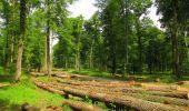 Randonnée Marche COYOLLES - en forêt de Retz_78_les rayons du Rond Capitaine - Photo 27