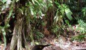 Trail Walk Unknown - 971 Trace du ruisseau - Photo 1