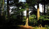 Randonnée Marche SAINT-JEAN-AUX-BOIS - en forêt de Compiègne_6_les Grands Monts_la route tournante sur la tête St-Jean - Photo 186