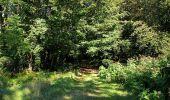 Trail Walk DAMPLEUX - en forêt de Retz_80_sur la Route Tortue et la Route Droite - Photo 250