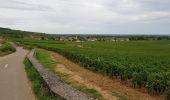 Trail Walk MONTHELIE - De Monthelie à Pommard - Photo 4
