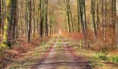 Randonnée A pied VILLERS-COTTERETS - le GR11A  dans la Forêt de Retz  - Photo 109