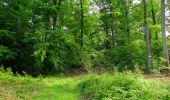 Randonnée Marche COYOLLES - en forêt de Retz_78_les rayons du Rond Capitaine - Photo 57