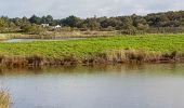 Randonnée Marche MESQUER - la pointe de Merquel à marée basse - Photo 12