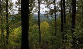 Trail Walk Viroinval - De Nismes à Petigny par le Tienne du Lion - Photo 9