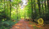 Randonnée A pied VILLERS-COTTERETS - le GR11A  dans la Forêt de Retz  - Photo 152