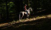 Trail Equestrian Libin - Chevauchée entre Lesse et Lomme - Photo 1