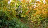 Randonnée Marche SAINT-JEAN-AUX-BOIS - en forêt de Compiègne_32_11_2019_les Tournantes de la Muette et sous la Tête Saint-Jean - Photo 166