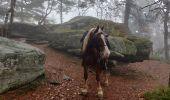 Trail Horseback riding AUBURE - 2019-11-03 WE Aubure Taennchel - Photo 3