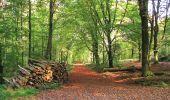 Randonnée A pied VILLERS-COTTERETS - le GR11A  dans la Forêt de Retz  - Photo 153