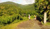 Trail Walk RIVIERE-SALEE - JOUBADIÈRE - MORNE CONSTANT - PAGERIE - Photo 52