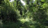 Randonnée Marche LACROIX-SAINT-OUEN - en forêt de Compiègne_35_la Croix Saint-Sauveur_le Ru du Goderu - Photo 4