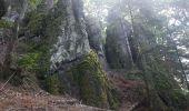 Randonnée Marche MUHLBACH-SUR-BRUCHE - Le Jardin des Fées par la cascade de Soulzbach - Photo 41