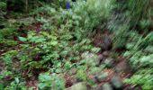 Trail Walk RIVIERE-SALEE - JOUBADIÈRE - MORNE CONSTANT - PAGERIE - Photo 40