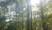 Trail Walk WASSELONNE - Geisweg - Elmerforst -Westhoffen - Photo 54