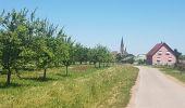 Trail Walk WASSELONNE - Geisweg - Elmerforst -Westhoffen - Photo 20