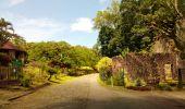 Trail Walk RIVIERE-SALEE - JOUBADIÈRE - MORNE CONSTANT - PAGERIE - Photo 2