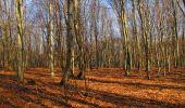 Trail On foot VIEUX-MOULIN - en forêt de Compiègne_23_la Grotte des Ramoneurs_le Mont Berny - Photo 107