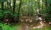 Randonnée Marche SAINT-JEAN-AUX-BOIS - en forêt de Compiègne_6_les Grands Monts_la route tournante sur la tête St-Jean - Photo 146