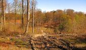 Randonnée A pied VILLERS-COTTERETS - le GR11A  dans la Forêt de Retz  - Photo 67