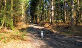 Randonnée A pied VILLERS-COTTERETS - le GR11A  dans la Forêt de Retz  - Photo 122