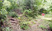 Trail Walk RIVIERE-SALEE - JOUBADIÈRE - MORNE CONSTANT - PAGERIE - Photo 7