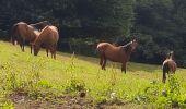 Randonnée Marche LOCMELAR - ballade 270719 - Photo 35