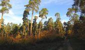 Randonnée Marche SAINT-JEAN-AUX-BOIS - en forêt de Compiègne_19_le Puits d'Antin_les Mares St-Louis_La Muette - Photo 26