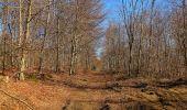 Trail Walk PIERREFONDS - en forêt de Compiègne_24_Tournantes sur le Voliard et sur la Fortelle_chaussée Brunehaut - Photo 138
