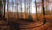 Trail On foot VIEUX-MOULIN - en forêt de Compiègne_23_la Grotte des Ramoneurs_le Mont Berny - Photo 111