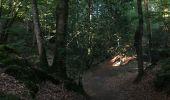 Randonnée Trail NEANT-SUR-YVEL - Autour des étangs à partir du gîte de tante Phonsine - Photo 7