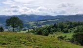 Randonnée Randonnée équestre ORBEY - 2020-06-28 WE Orbey Petit Hohnack Glasborn - Photo 2
