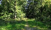 Trail Walk DAMPLEUX - en forêt de Retz_80_sur la Route Tortue et la Route Droite - Photo 262