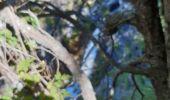 Randonnée Marche REALLON - Clot l'herbous - Photo 10