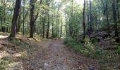 Trail Mountain bike VAUX-SUR-LUNAIN - La vallée du Lunain - Photo 5
