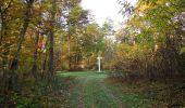 Randonnée Marche SAINT-JEAN-AUX-BOIS - en forêt de Compiègne_19_le Puits d'Antin_les Mares St-Louis_La Muette - Photo 47