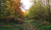 Randonnée Marche SAINT-JEAN-AUX-BOIS - en forêt de Compiègne_32_11_2019_les Tournantes de la Muette et sous la Tête Saint-Jean - Photo 184