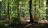 Trail Walk DAMPLEUX - en forêt de Retz_80_sur la Route Tortue et la Route Droite - Photo 289