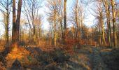 Trail Walk SAINT-JEAN-AUX-BOIS - en forêt de Compiègne_33_12_2019_les Tournantes de l'étang Saint-Jean et des Prés Saint-Jean - Photo 183