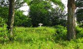 Randonnée Marche COYOLLES - en forêt de Retz_78_les rayons du Rond Capitaine - Photo 108