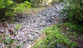 Trail Walk RIVIERE-SALEE - JOUBADIÈRE - MORNE CONSTANT - PAGERIE - Photo 49