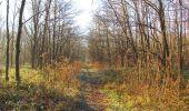 Trail Walk SAINT-JEAN-AUX-BOIS - en forêt de Compiègne_33_12_2019_les Tournantes de l'étang Saint-Jean et des Prés Saint-Jean - Photo 50