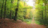 Randonnée A pied VILLERS-COTTERETS - le GR11A  dans la Forêt de Retz  - Photo 151