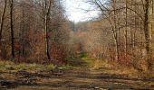 Trail Walk PIERREFONDS - en forêt de Compiègne_24_Tournantes sur le Voliard et sur la Fortelle_chaussée Brunehaut - Photo 83