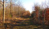 Trail Walk PIERREFONDS - en forêt de Compiègne_24_Tournantes sur le Voliard et sur la Fortelle_chaussée Brunehaut - Photo 113