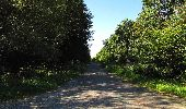 Trail Walk DAMPLEUX - en forêt de Retz_80_sur la Route Tortue et la Route Droite - Photo 287