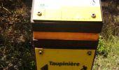 Randonnée Marche LE DIAMANT - POINT VUE RAVINE GENS BOIS - TAUPINIÈRE - Photo 6