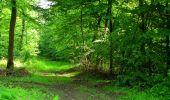 Randonnée Marche COYOLLES - en forêt de Retz_78_les rayons du Rond Capitaine - Photo 43