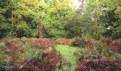 Randonnée A pied VILLERS-COTTERETS - le GR11A  dans la Forêt de Retz  - Photo 105